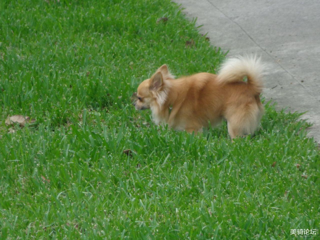 在公园里玩耍的可爱小狗狗